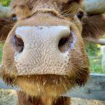 Daphne's nose